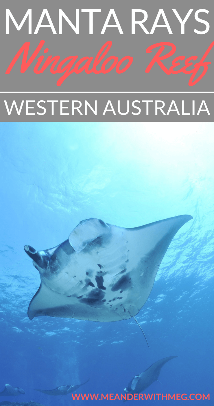 No trip to Western Australia would be complete without a visit to Coral Bay. Move over Great Barrier Reef, the Ningaloo Reef is packed full of gorgeous marine life just offshore. Plan a trip to WA and make sure you add swimming with manta rays onto your bucket list. Read on to find out more.