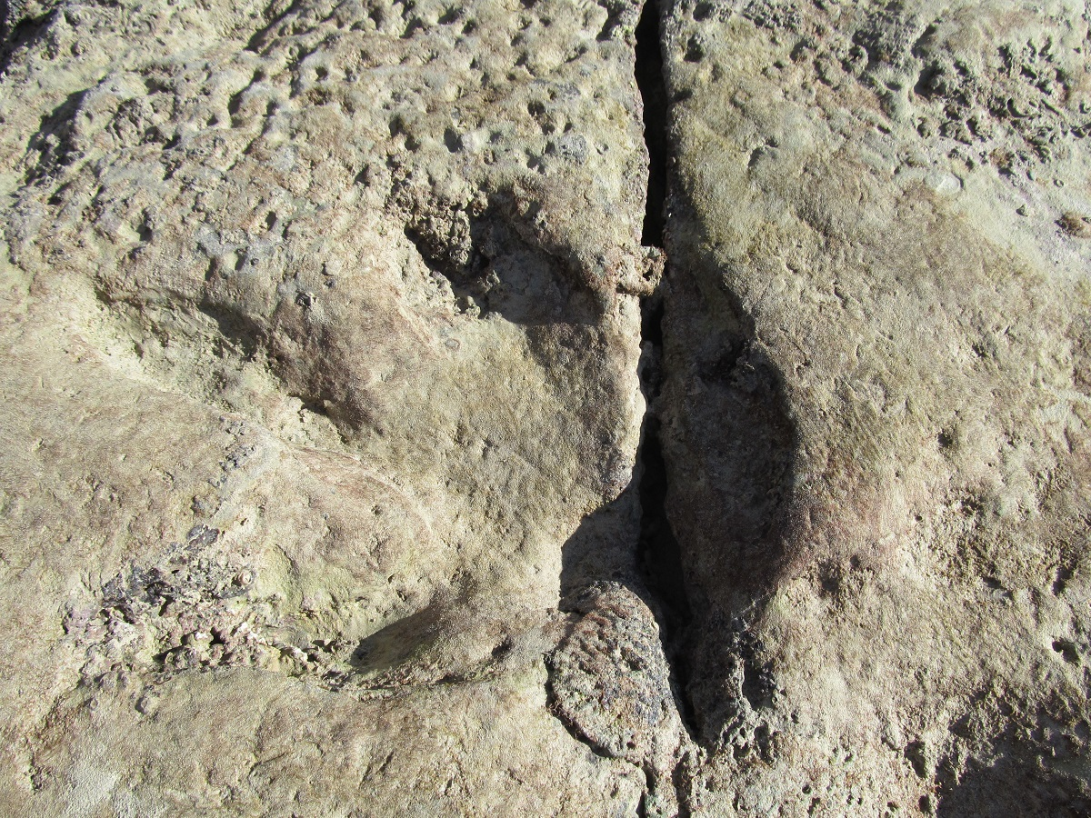 gantheaume=point-cable-beach-western-australia-broome-dinosaur-footprints