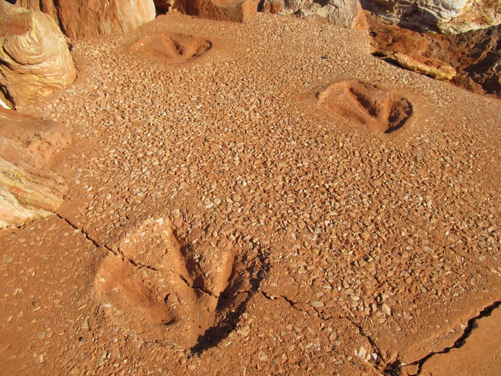 A Mess Of Large Sauropod Footprints In The Broome Sandstone On Dampier Peninsula Possibly Made By A Single Herd Or Procession Animals Moving