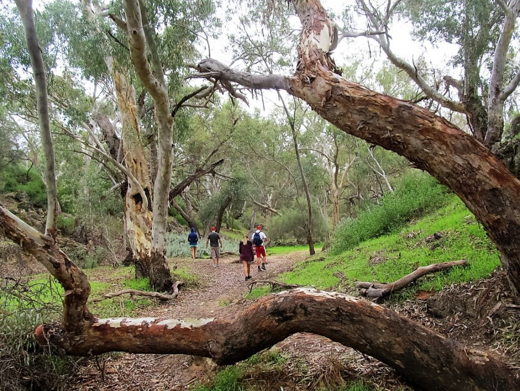A Daytrip To Stockyard Gully Caves