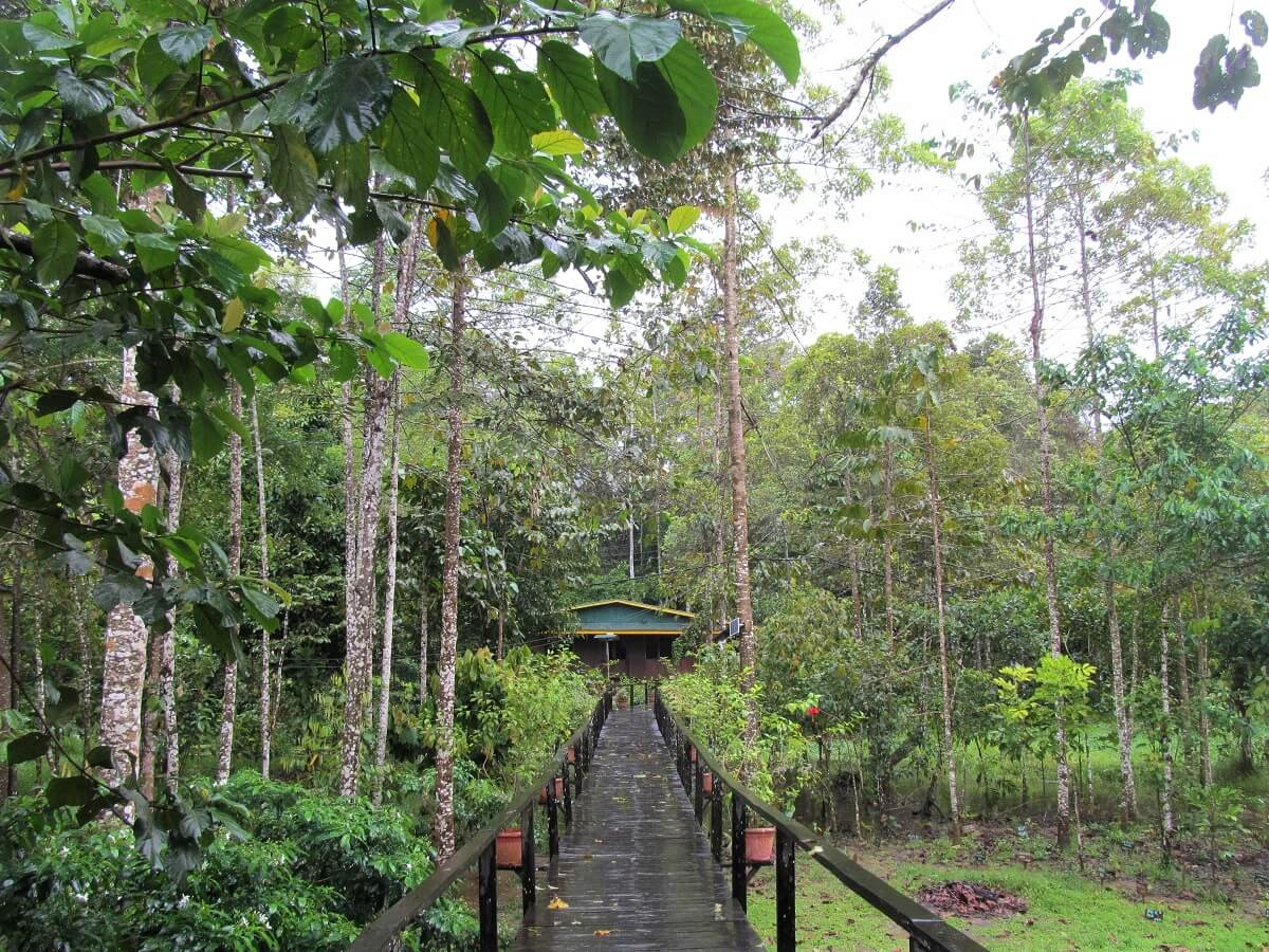 Bilit Adventure Lodge Kinabatangan River